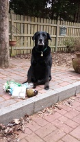 Max A Pooch poses with litter he picked-up during a walk